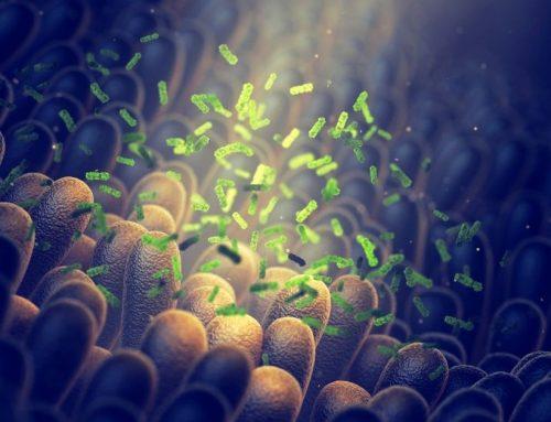 7 Tipps um dein Mikrobiom zu hacken